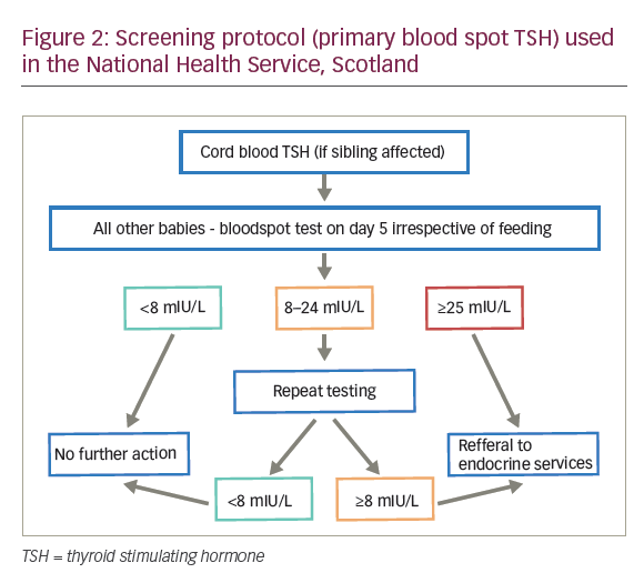 Neonatal Screening for Congenital Hypothyroidism with Focus on