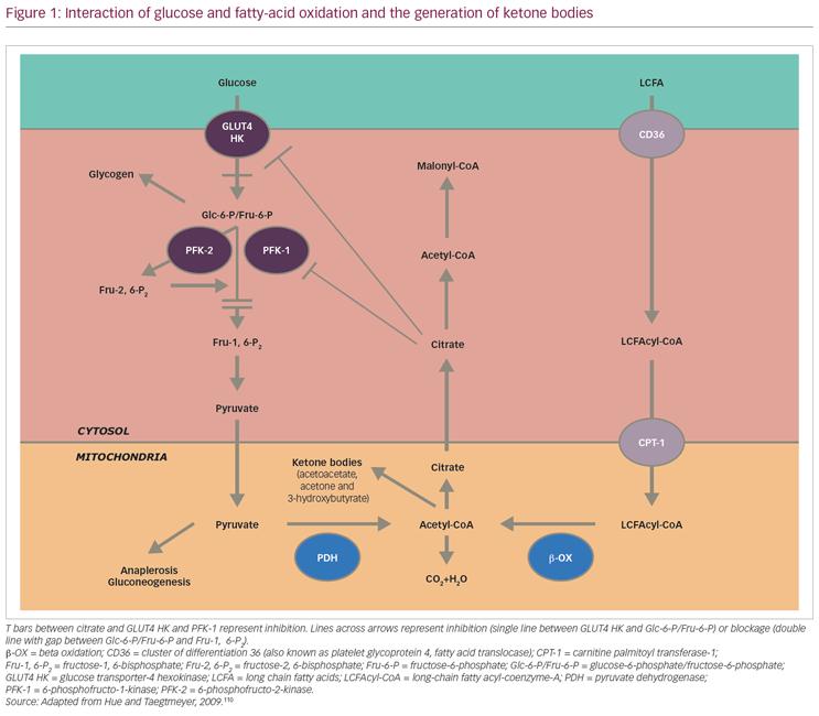 cyclic ketogenic diet ppar